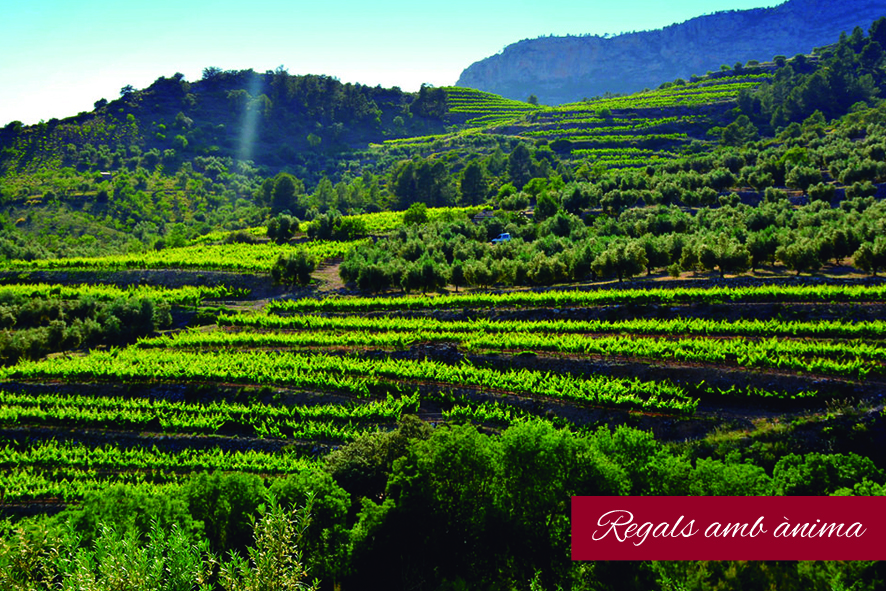 Xec_Regal_Enoturisme_Priorat