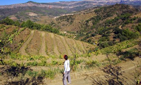 Senderisme entre vinyes al Priorat