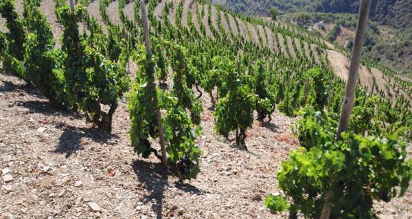 Terra de vins per descobrir