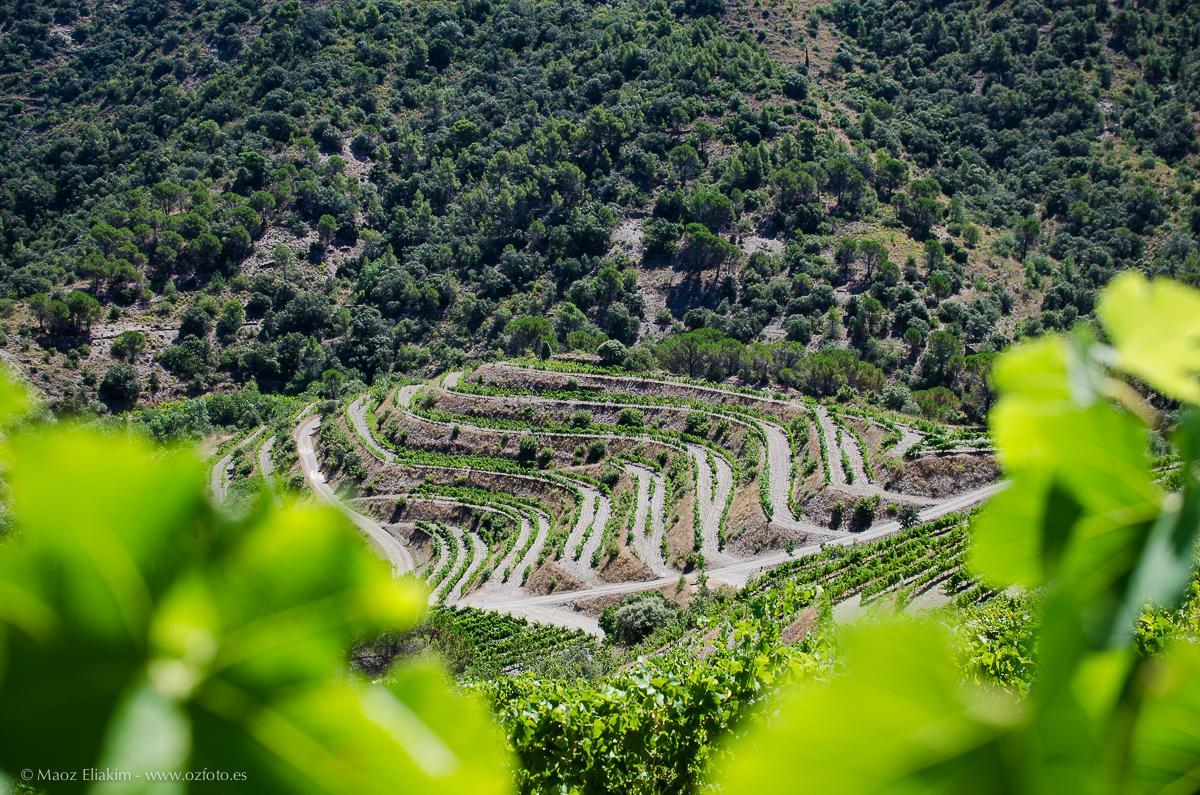 Wine tourism between vineyards of Priorat