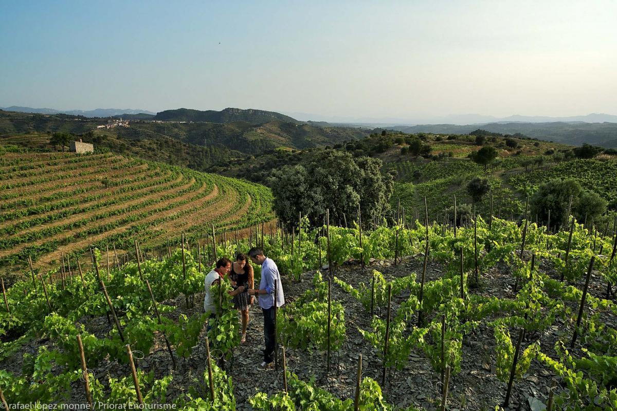 vinyes del Priorat