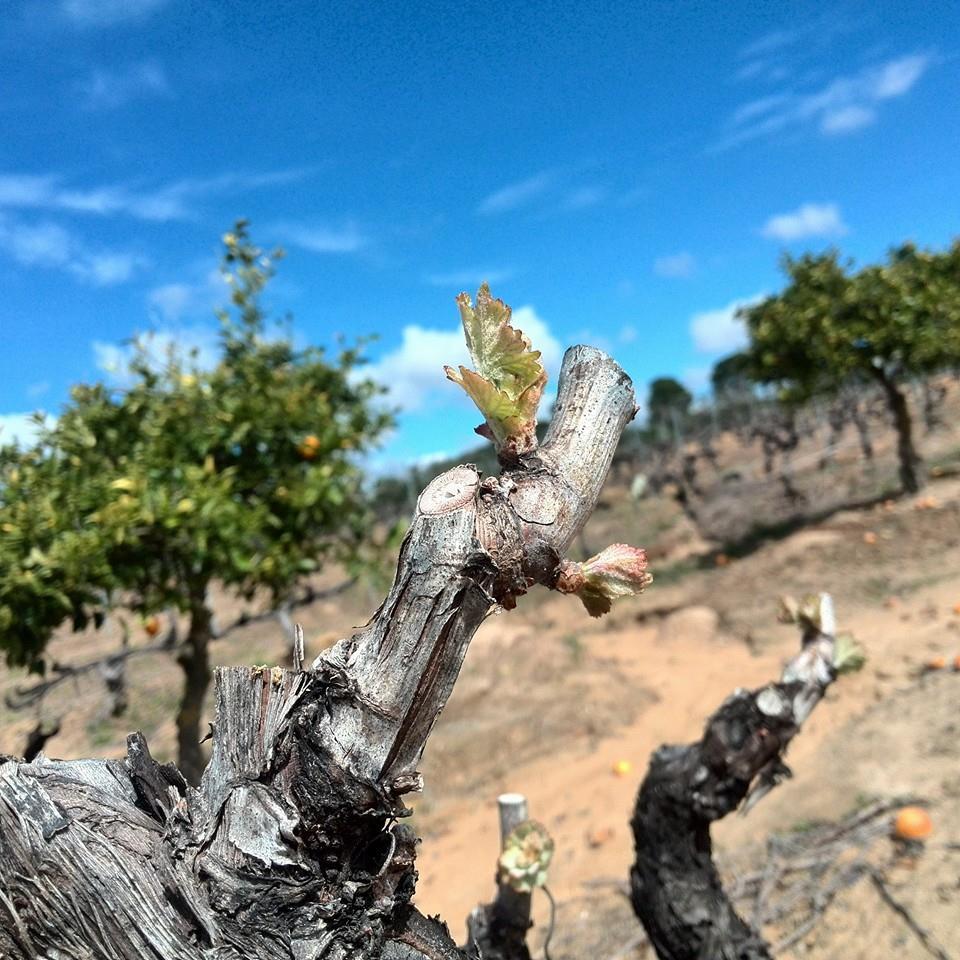 Tast de vins i pernils d'Andalusia al Priorat
